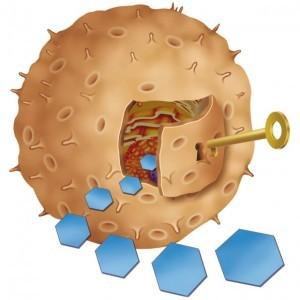 La resistencia a la insulina es una condición de prediabetes que puede ser revertida